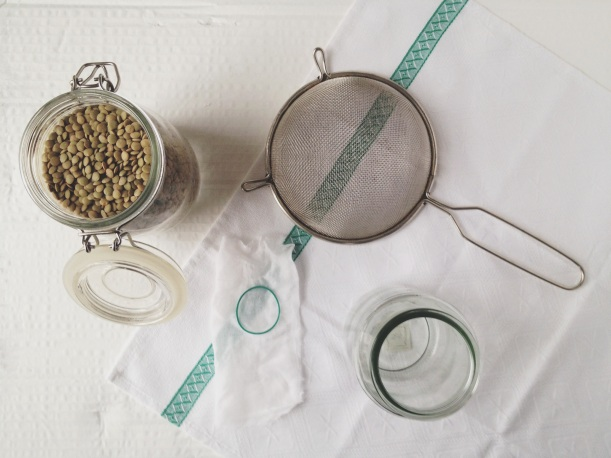 what you need to sprout lentils