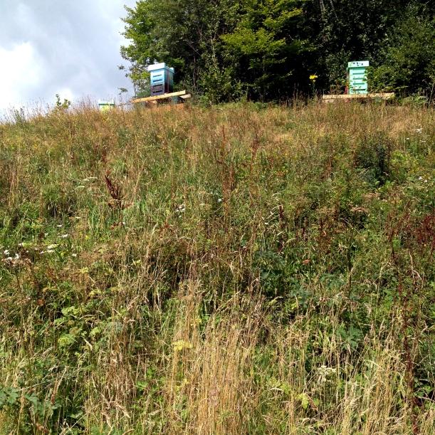 Hives at Eden