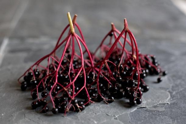 Elderberry-stalks