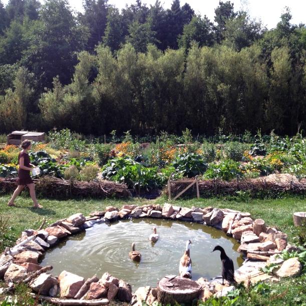 hazelip vegetable garden