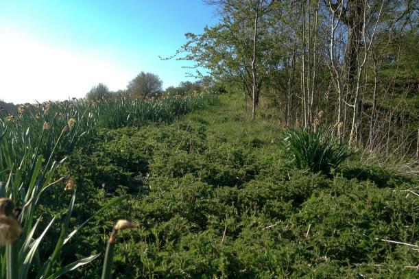 Spring nettles